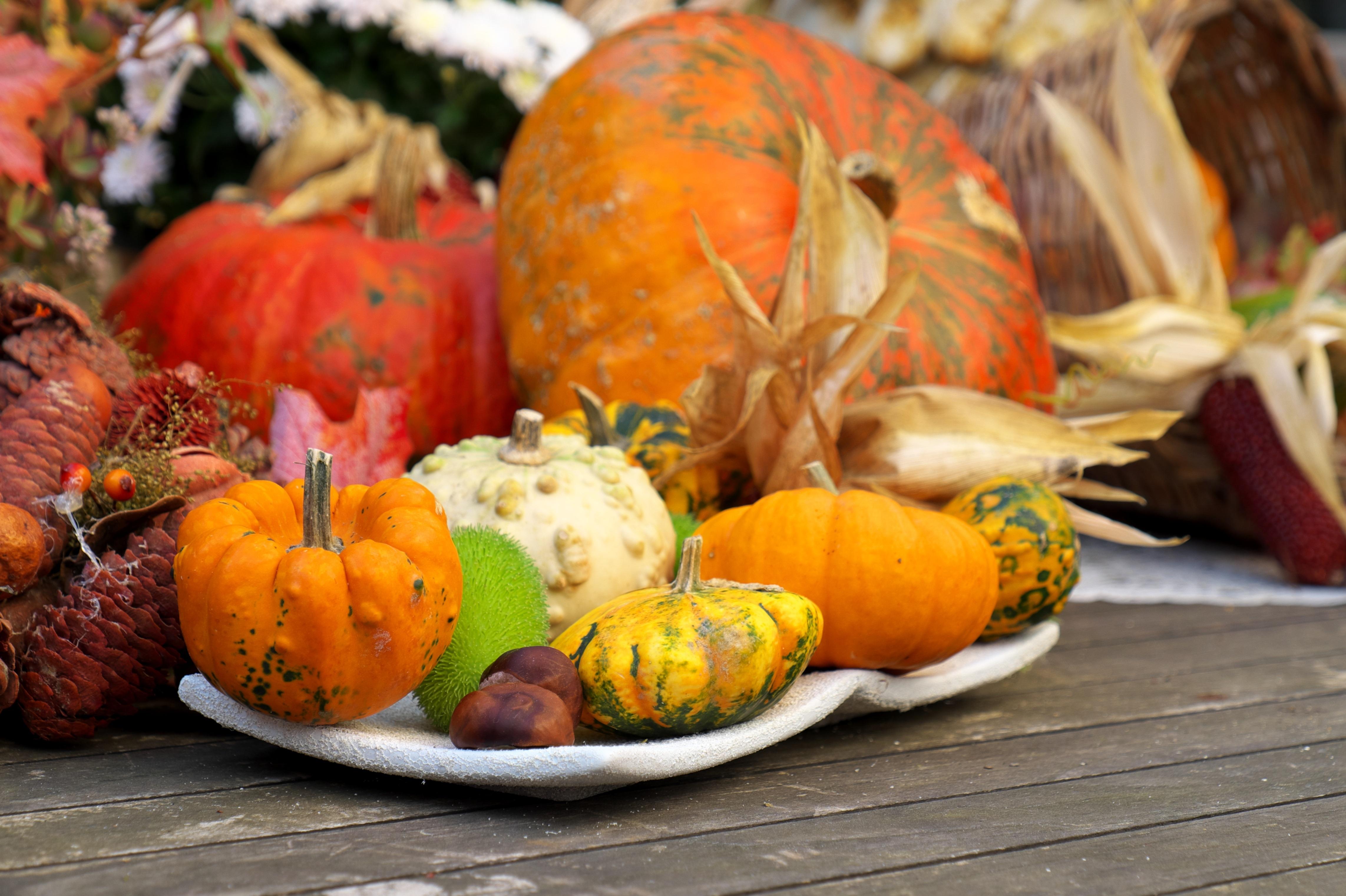 Herbstzeit ist Kürbiszeit: Wissenswertes, Tipps und Rezepte rund um die vielseitige Superfrucht!
